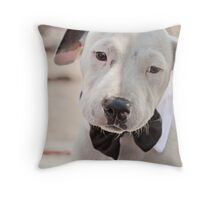 Staffordshire Bull Terrier,getting married,invite the dog ? Throw Pillow
