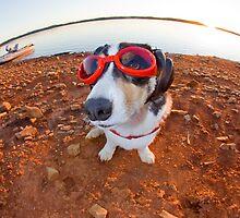 Safety Dog by William C. Gladish