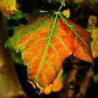 Vivid Leaf by Ben Johnson
