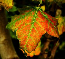 Vivid Leaf by Ben Johnson