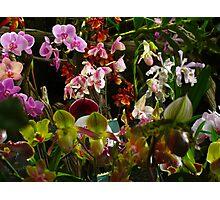 Orchid crescendo Photographic Print