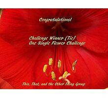 Challenge Winner - One Single Flower Photographic Print
