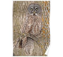 Camouflage-an owl's best friend Poster