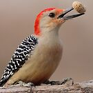 Red belly with peanut. by Gregg Williams