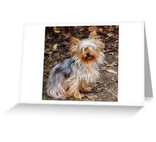 Cute Little Yorkie Greeting Card