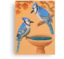 Blue Jays In Fall Canvas Print