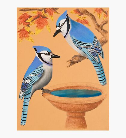 Blue Jays In Fall Photographic Print