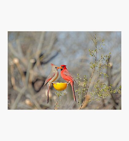 Mr and Mrs Red  Photographic Print