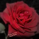 Easter Rose by Carol Field