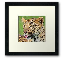The Mashaba female- I am trying to be a good mother ! Framed Print