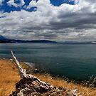 Tree remains - Bruny Island, Tasmania by clickedbynic