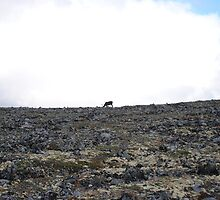 Lonely Reindeer by 5unm4g