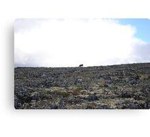 Lonely Reindeer Canvas Print