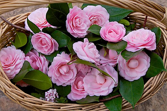 Basket of Camellias by John Butler