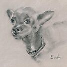 Chihuahua - original drawing by Paulette Farrell