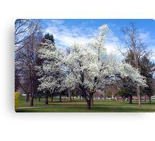 Snow-White Blossoms Canvas Print