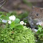 Bank vole by Peter Skillen