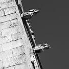 Gargoyles by jasminewang