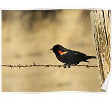 Red Wing Blackbird Poster
