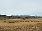 Cattle Country - Meals on Wheels by BettyEDuncan