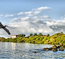 Pelican Coming Home by Chris Thaxter