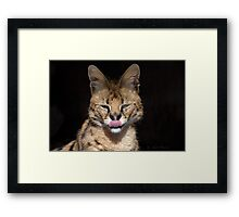 A special Cat..The Serval Framed Print