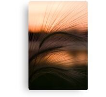 Grass Sunset Canvas Print