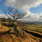 Barden Moor Tree. by John Pickles