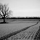 Tree in field in Winter by Michelle Hardy  Photography