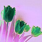 St Patrick's Day Tulips by Fara
