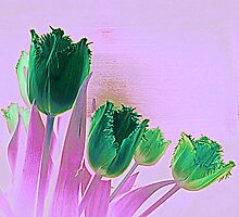 St Patrick's Day Tulips by Fara