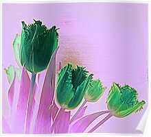 St Patrick's Day Tulips Poster