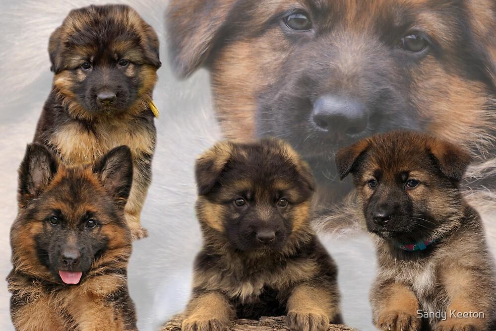 German Shepherd Puppy Collage by Sandy Keeton