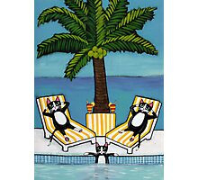 Cats on Vacation Photographic Print
