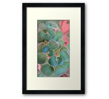 Soft Smart Shoot Framed Print
