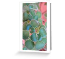 Soft Smart Shoot Greeting Card