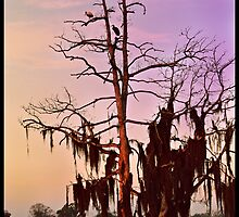 Colorful Sunrise Wilderness Florida Trees and Spoonbills by megamonroe