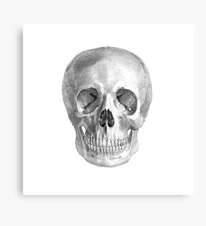 Albinus Skull 01 - Back To The Basic - White Background Canvas Print