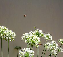 Bees - 16 03 13 - Seven by Robert Phillips