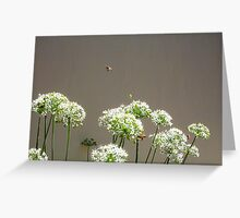 Bees - 16 03 13 - Seven Greeting Card
