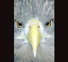 Sea Eagle iPhone Cover by Roger Hall