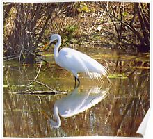 Great White Egret, Alabama's Most Popular Heron Poster
