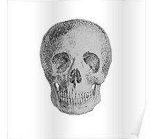 Albinus Skull 04 - Never Seen Before Genius Diamonds  - White Background Poster