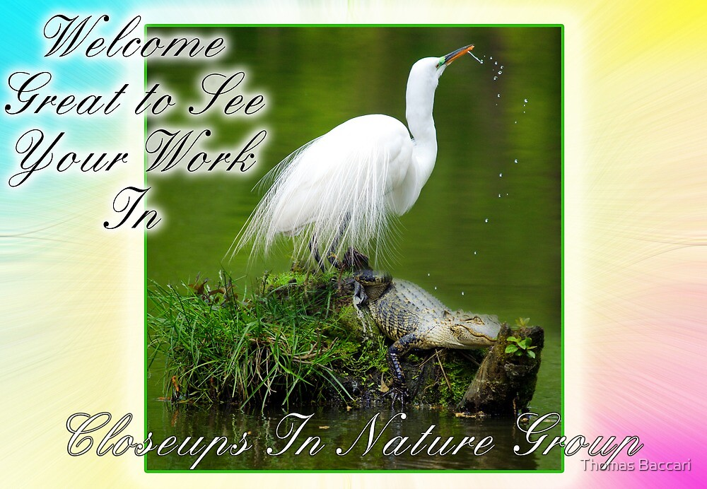 Welcome to Closeups in Nature Banner by TJ Baccari Photography