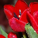 The First Colors of Spring by Grinch/R. Pross