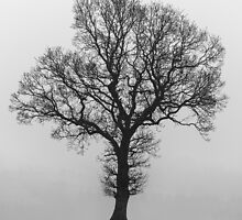 Tree & Mist by redfibres