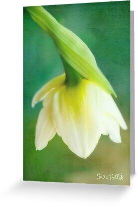 Demure Daffodil by Anita Pollak