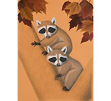 Fall Raccoons On Tree Photographic Print