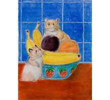 Hamsters In Fruit Bowl Photographic Print