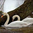 Two Swans by Theresa Selley